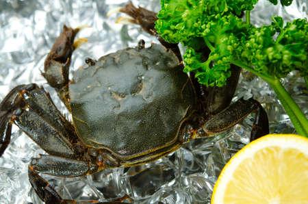crustacea: mitten crab
