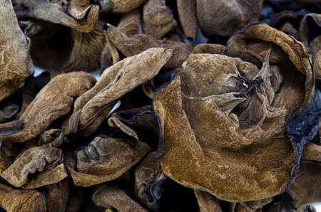 black fungus Stock Photo - 13807848