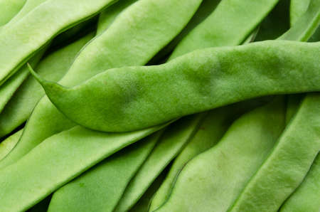 common bean Stock Photo - 13808085