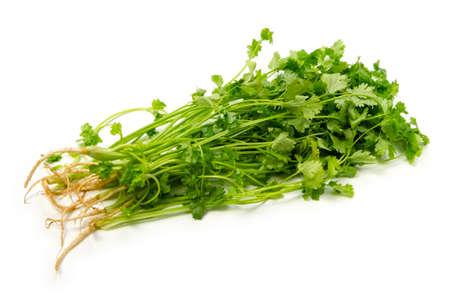 garden truck: coriander