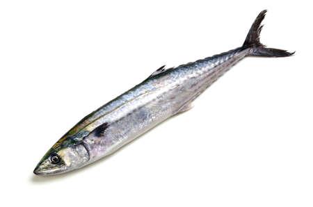 japanese spanish mackerel
