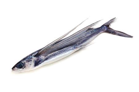 côte poisson volant