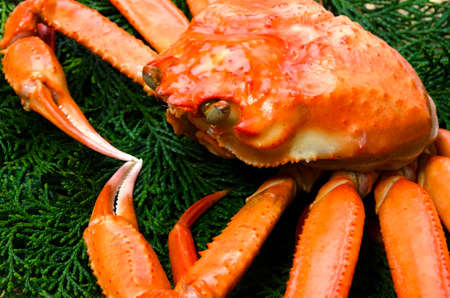 red snow crab photo