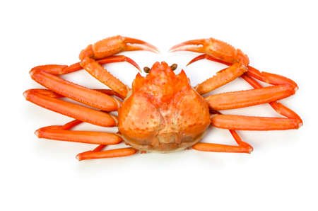 red snow crab photo