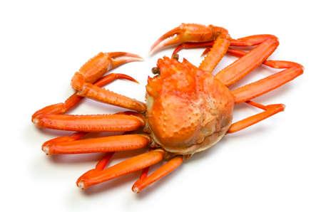 cangrejo: cangrejo de las nieves de color rojo