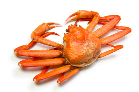 cancer crab: red snow crab