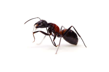 ant Stock Photo - 14438450