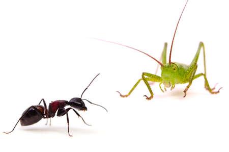 hormiga: La hormiga y el saltamontes