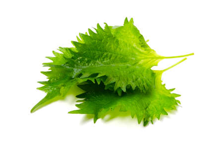 shiso Stock Photo - 15101738