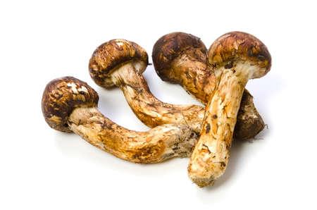 fungoid: matsutake mushroom