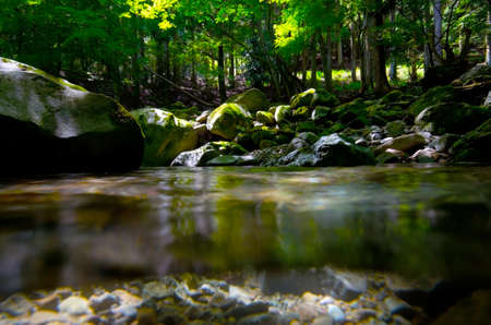 hillwalking: Underwater photography series    Namesawa Valleys. This image was taken by underwater SLR in Fuji Hakone Izu National Park, Japan.