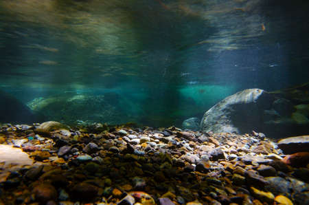 river banks: Underwater photography series    Namesawa Valleys. This image was taken by underwater SLR in Fuji Hakone Izu National Park, Japan.