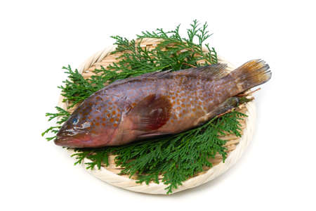 redspotted grouper Stock Photo - 16041523