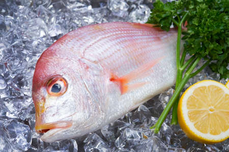 yellowback seabream photo