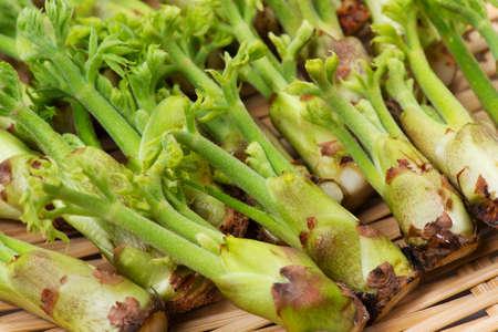 aralia: aralia sprout