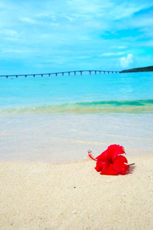 Hibiscus on Tropical Beach  This image was taken in Okinawa Prefecture, Japan