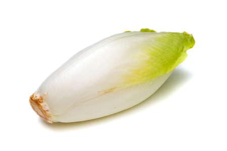 endivia: Achicoria Cichorium intybus