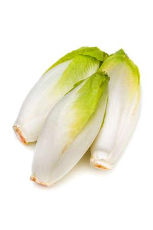 chicory: Chicory-Cichorium intybus