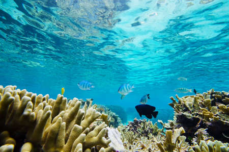 Reef and Tropical Fishes, Okinawa Prefecture Japan