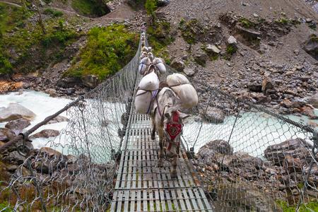 cable bridge: Caravan Animal Donkeys Loaded Bags Crossing Cable Bridge. Trekking Landscape View Background. Fast Mountain River Under Bridgework.Horizontal Photo