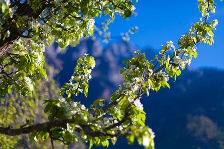 Closeup View Mountains Hiking Himalayas.Beautiful End Summer Season Background.Horizontal Photo.Green Three Cloudy Sky Mountainous Terraces.No body Image