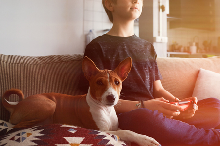 Young cute boy playing video game console seated on a sofa with basenji dog puppy close in living room at home. 免版税图像
