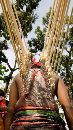 hindus: thaipusam devotee with hooks on their back with ropes pulling Stock Photo