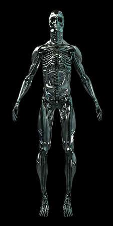 Dies ist eigentlich ein Hybrid aus mehreren Skelett Standard-Bild - 11258778