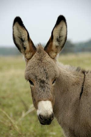 Donkey Banco de Imagens