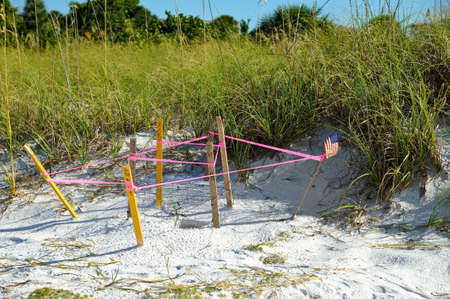 Protected turtle nest on the beach of Anna Maria, Florida