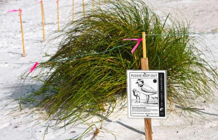안 나 마리아 섬, 플로리다 미국 -2011 5 월 6 일 : 눈 덮인 후치 중첩 영역. 이러한 철새 보호 종을위한 임시 성역.