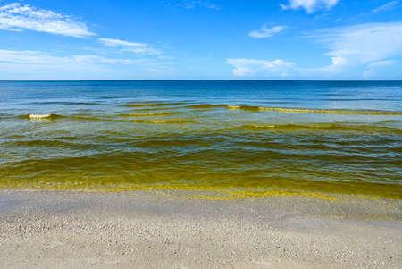 メキシコ湾の目に見える赤潮渦鞭毛藻類のいくつかの種が原因で発生する藻類ブルーム (水生微生物の大規模な濃度) として知られている共通の現象であり花は赤や茶色の色。 写真素材 - 75388815