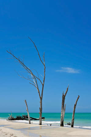 Scenic View of Beautiful Weathered Driftwood on the beach of Beer Can Island Longboat Key Florida Stock Photo
