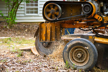 Eine Stumpfschleifmaschine, die einen Stumpf von einem gefällten Baum entfernt