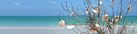 Branch on Anna Maria Island Beach that people have placed Sea Shells on. Beach Landscape Banner 版權商用圖片