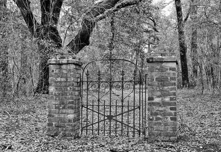 A mysterious Old Iron Gate in the Middle of the Woods Leading to No Where