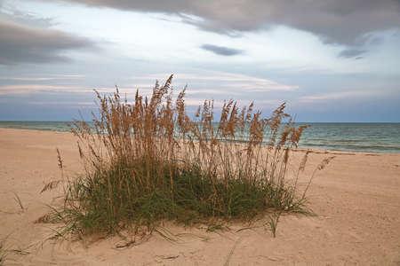 Sea Oats on Beach of the Gulf Coast of Florida at Dusk
