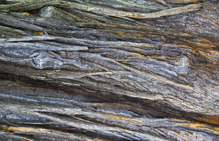 Highly detailed rough old bark photo