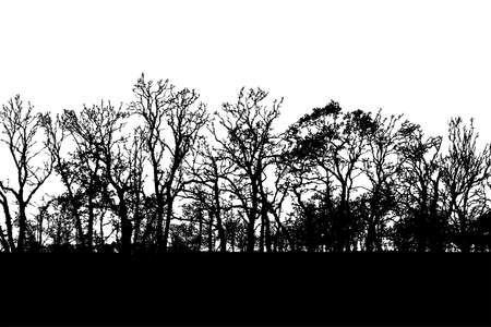 Wild looking, tree-lined horizon silhouette vector