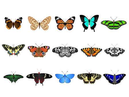 admiral: Set of colorful vector butterflies from around the world.