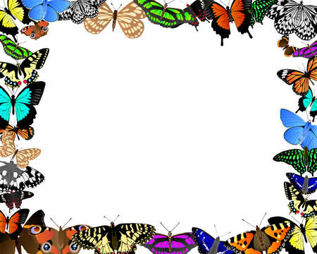 Colorful butterflies in a frame around clear white space