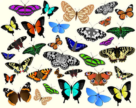 admiral: Colorful vector butterflies from around the world.