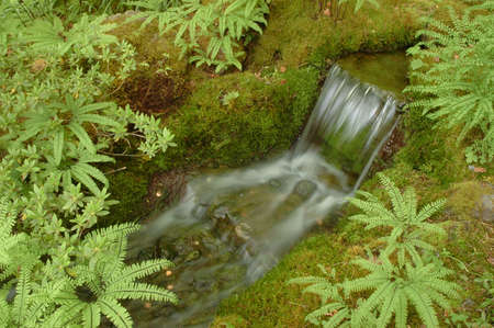 Beautiful small waterfall in maple forest photo