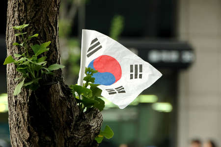 Korean flag on a tree photo