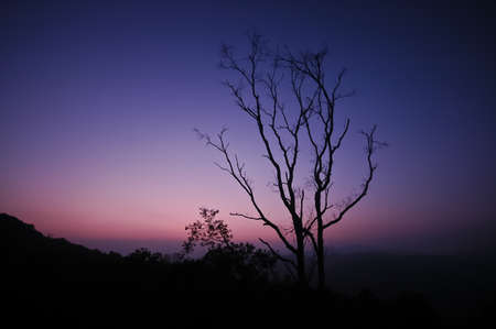 Dramatic silhouette shape of tree branches during twilight sunset photo