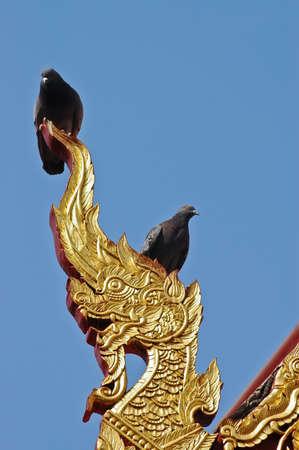 Birds on top of Naga dragon golden statue in Northen Thailand temple photo