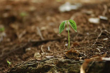 New hope from growing little plant from the earth photo