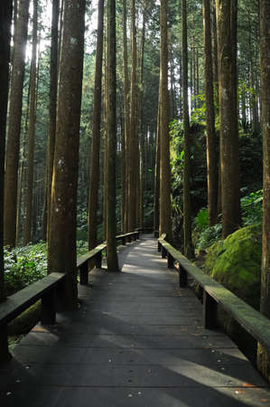 Wooden walkway climbing steps in deep forest photo