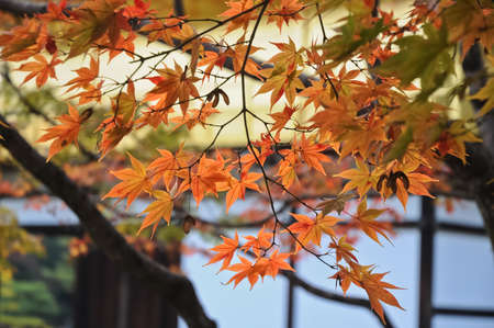 Red and orange maple leaves at Kyoto temple in Autumn photo