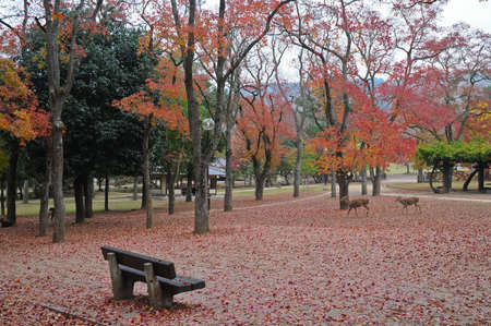 Lonely wooden bench in Japanese Autumn garden photo